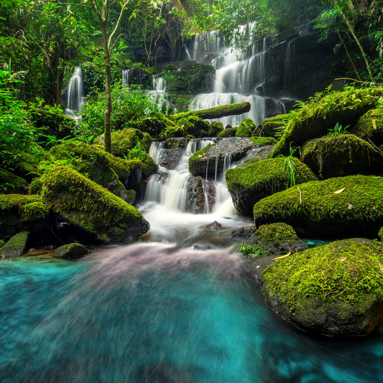 Waterfalls in lush forest setting